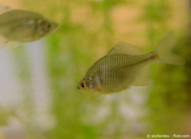 Welche fische f r den gartenteich garten hausxxl for Teich fische ohne filter