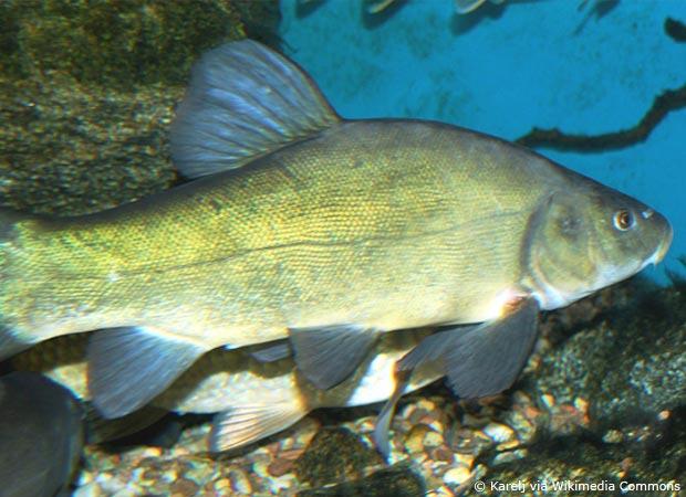 Etwas Neues genug Welche Fische für den Gartenteich? - Garten | HausXXL | Garten #IH_28