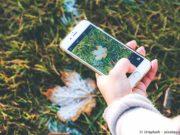 Die besten Garten Apps für Hobbygärtner