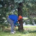 Selbstständig einen Baum fällen - Eine Anleitung