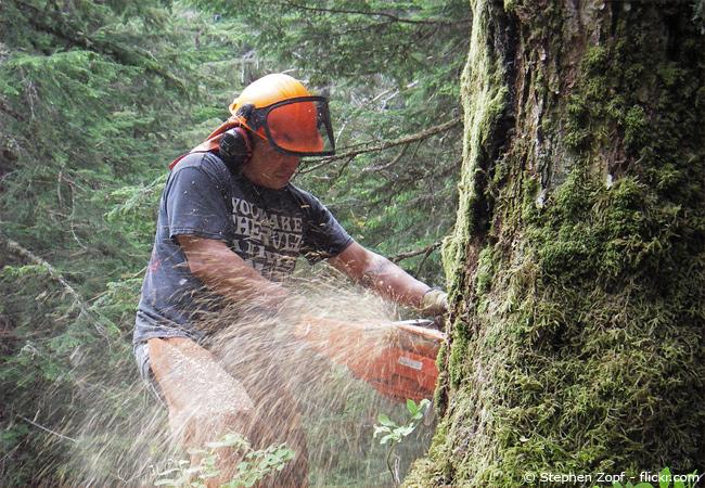 Fabulous Bäume richtig fällen - Tipps und Anleitung - Garten | HausXXL TC26