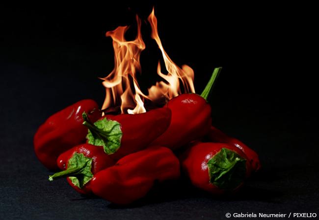 baum chilli pflege