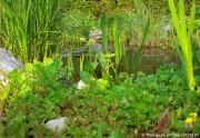 Gartenteich anlegen teil 5 bei der teichumrandung die for Gartenteich bepflanzen