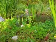 gartenteich-bepflanzen