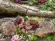 Ein moderner Steingarten
