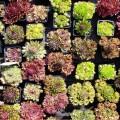 Steingarten bepflanzen.