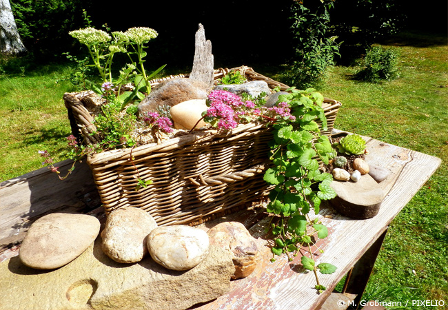 Schöne Steingartenpflanzen