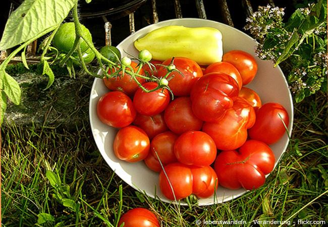 Tomaten planzen Tipps.