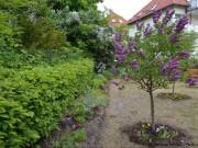 Die Baumgrenze zum Nachbarn ist meist von der Höhe des Baumes abhängig
