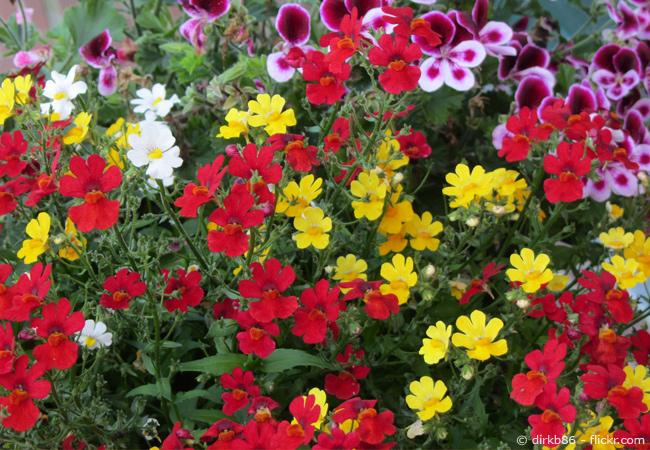 Gartentipps im Mai