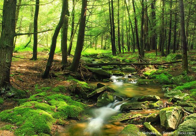 Biophilia-Effekt im Wald
