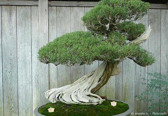 Erfolgreiche Bonsai Pflege