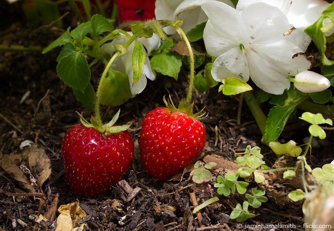 Gartenarbeiten im Juni