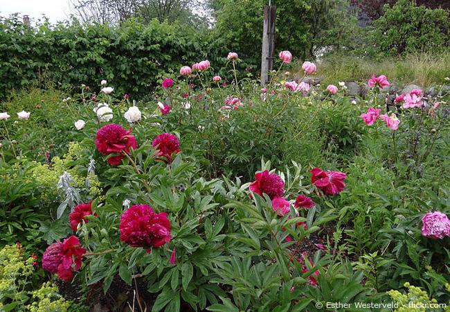 Gartentipps im Juni