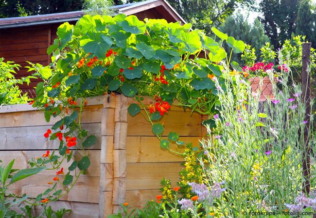 Ein hochbeet aus holz selber bauen garten hausxxl for Garten anlegen plan