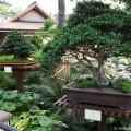 japanischer garten anlegen tipps f r pflanzen und kies. Black Bedroom Furniture Sets. Home Design Ideas