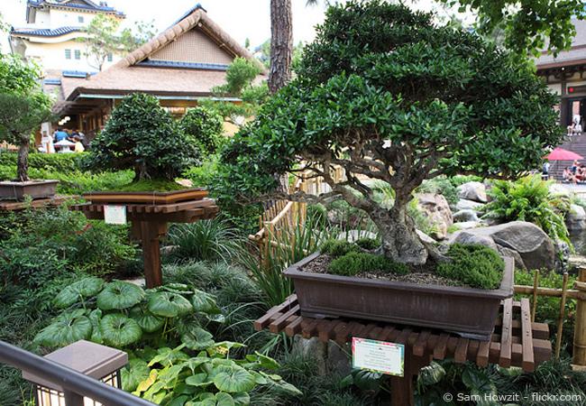 pflege-bonsai-baum