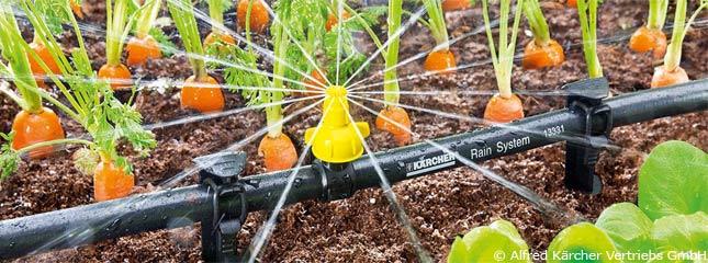 Gartenbewässerung mit Schlauchsystem