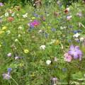 Einen Naturgarten anlegen bedeutet, der Natur ihren Lauf zu lassen.
