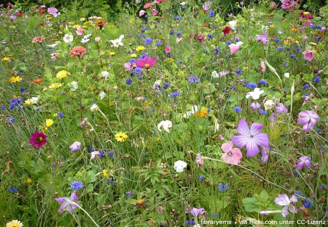 Beispiel für einen üppigen Vagabundgarten