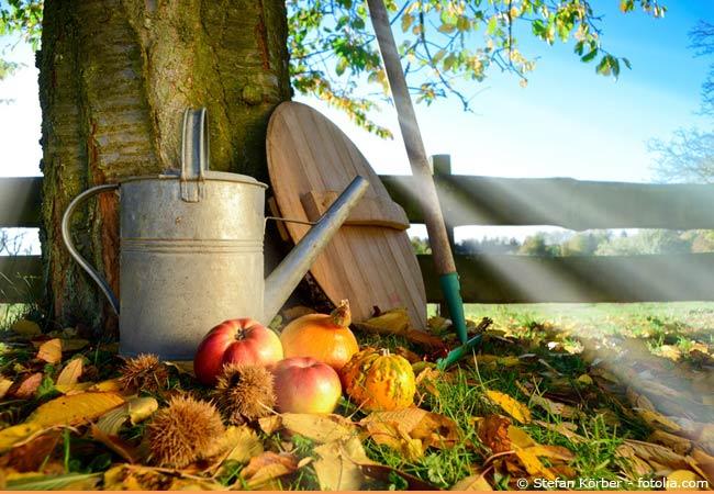 Der September gehört zu den aktivsten Monaten innerhalb der Gartenarbeit