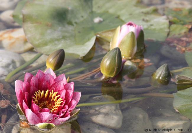Gartenteich im Herbst Pflanzen, Fische und Teichüberwintern Garten HausXXL Garten HausXXL ~ 27032343_Gartenteich Pflanzen Wachsen Nicht