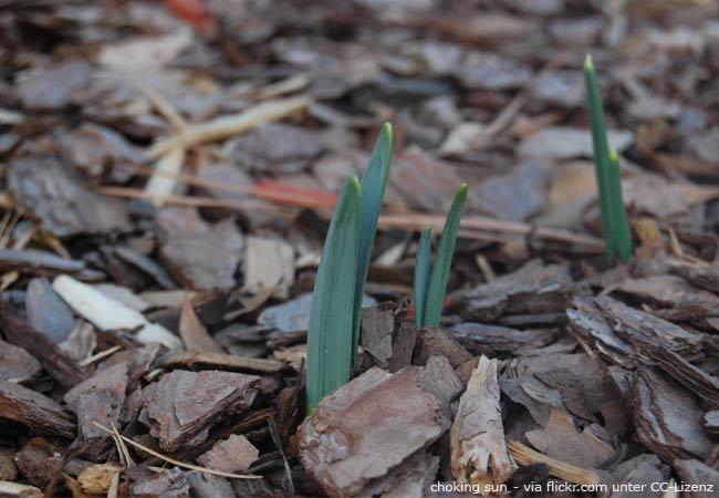 Wann sollte man Blumenzwiebeln pflanzen?