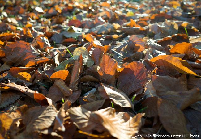 Herbstlaub zum entsorgen