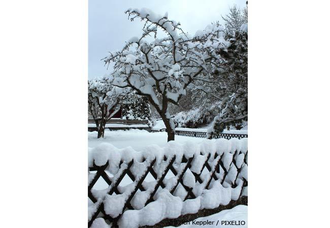 obstbaeume-beschneiden-vor-dem-ersten-schnee