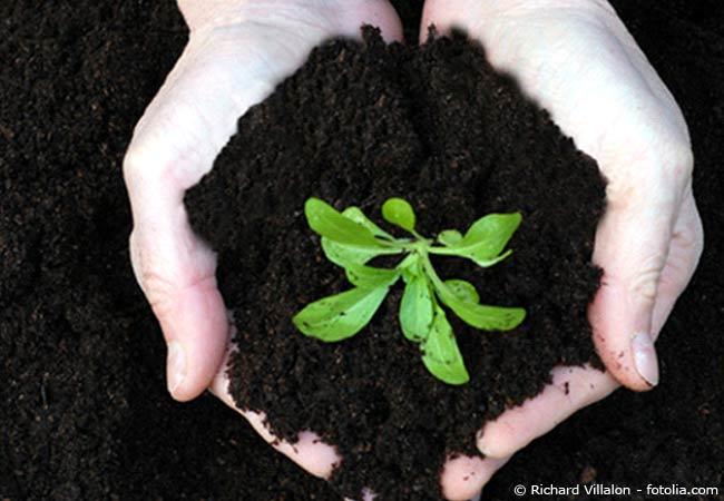 Kaffeesatz hilft beim Pflanzenwachstum