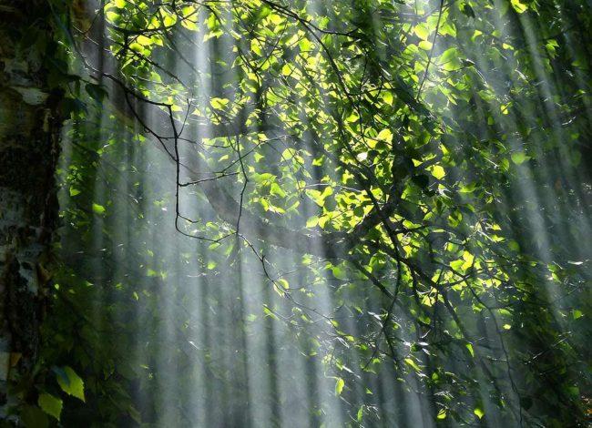 Waldgarten mit Lichtung