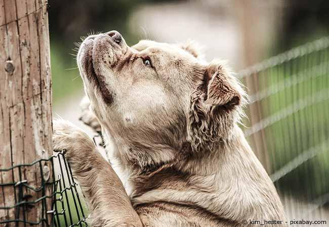 Hundesicherer Garten