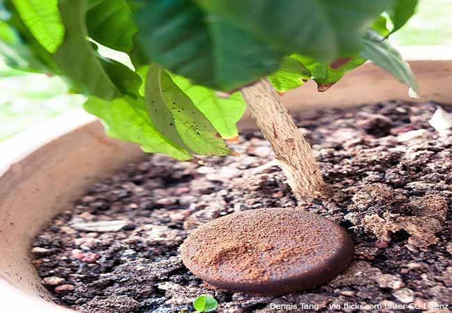 pflanzen d ngen leicht gemacht darauf kommt es im garten an garten hausxxl garten hausxxl. Black Bedroom Furniture Sets. Home Design Ideas