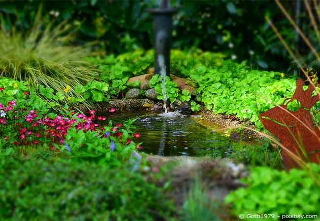 Teichpflege Wasserpumpe
