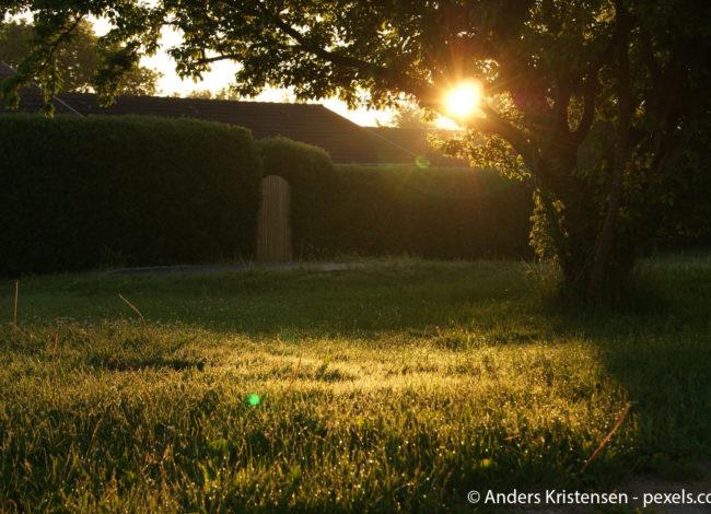 Gras Garten