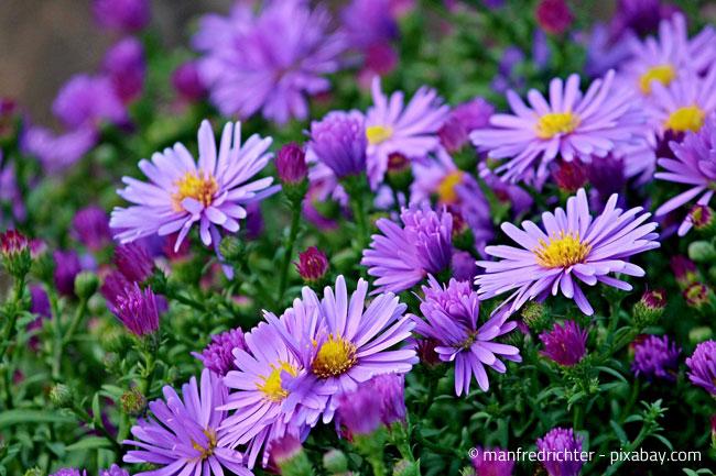 Kleines Pflanzenlexikon Die 10 Schönsten Herbstpflanzen