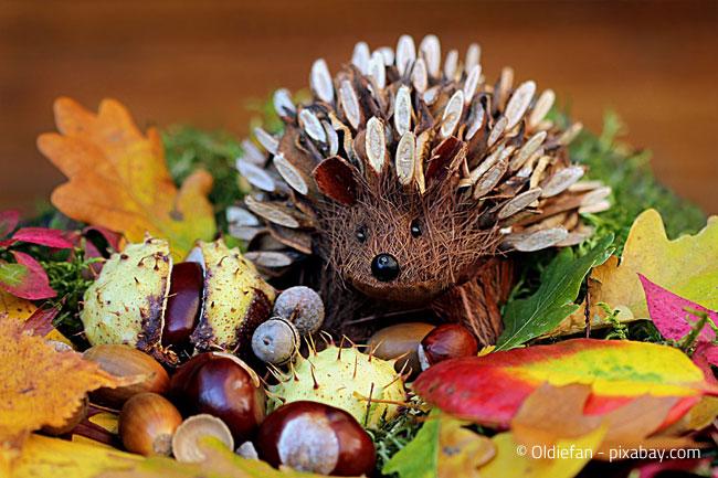 Niedlicher Igel im Herbstnest