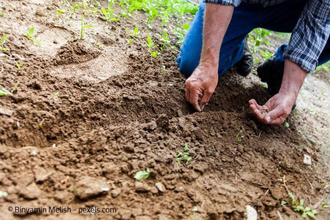 Gartenarbeit: Finden Sie das richtige Maß und vergessen Sie die Entspannung nicht