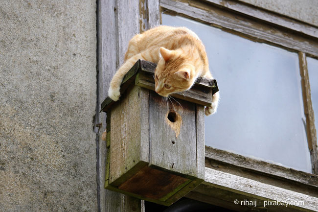 Kein guter Ort für Vögel - Dieses Häuschen ist nicht sicher