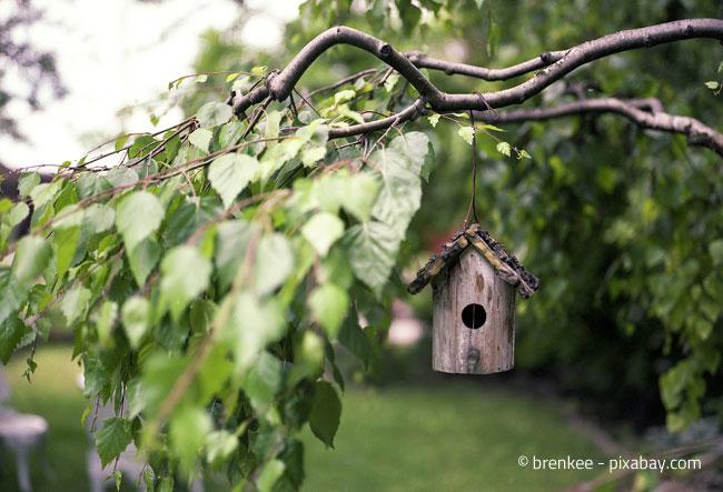 Vogelhäuschen in sicherer Lage