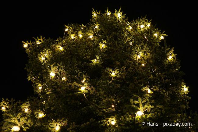 Lichterglanz Im Garten: Auch Eine Hecke Kann Geschmückt Werden