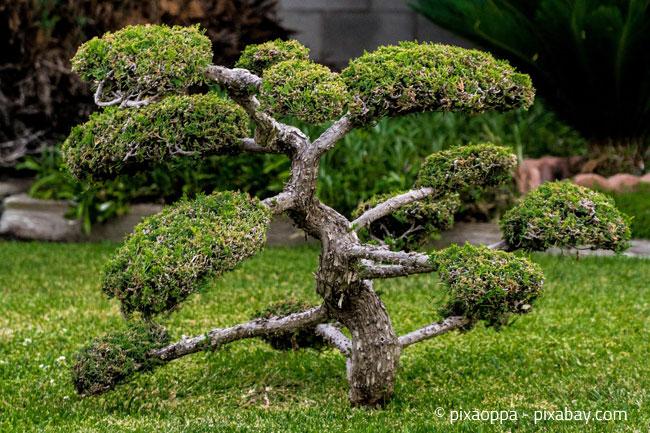 Bonsai in einem japanischen Garten