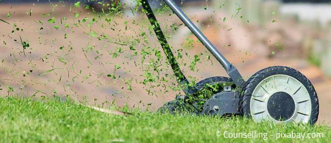 Wichtig ist auch: Nicht zu oft den Rasen mähen!