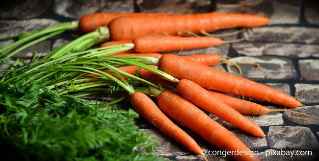 Karotten können ohne Vorzüchtung direkt ins Gartenbeet eingesät werden