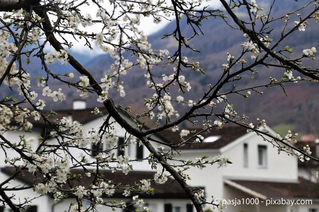 Obstbäume sollten nach dem letzten Frost verschnitten werden