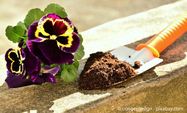 Frühblüher wie Stiefmütterchen machen Ihren Garten bunt