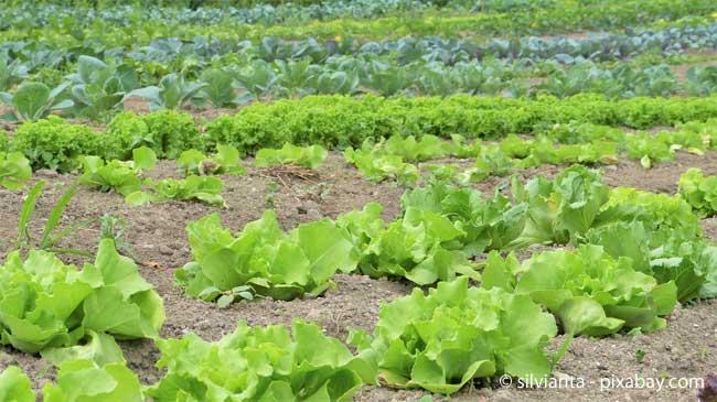 Bevor Sie zum Beispiel Gemüsebeete anlegen, sollten Sie alles genau planen