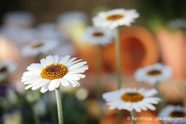 Ist Ihr Garten von Hauswänden umgeben, sollten Sie helle Pflanzen wählen