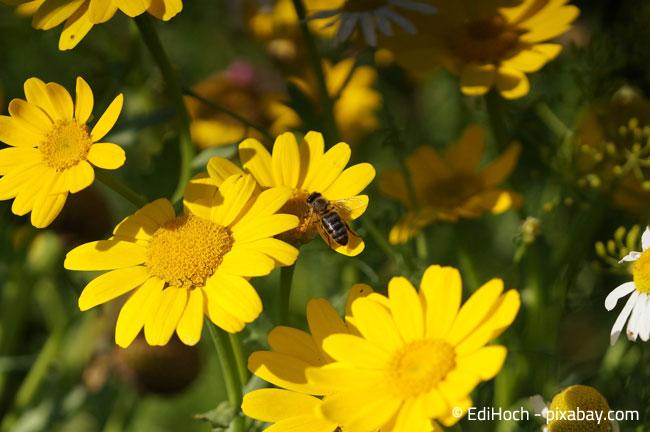 Helfen Sie mit Ihrem Garten, Insekten einen Lebensraum zu bieten