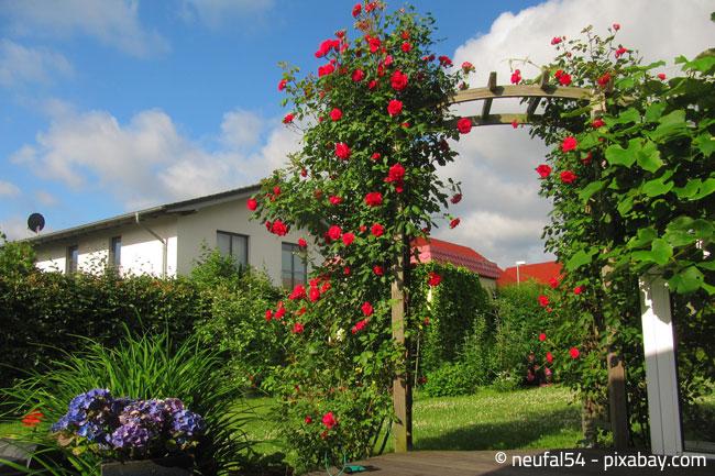Der Rosenbogen sollte sicher aufgestellt werden, damit er auch stärkerem Wind standhalten kann